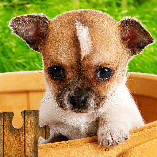 Dogs Jigsaw Puzzles Game – For Kids & Adults 🐶 26.3 APK