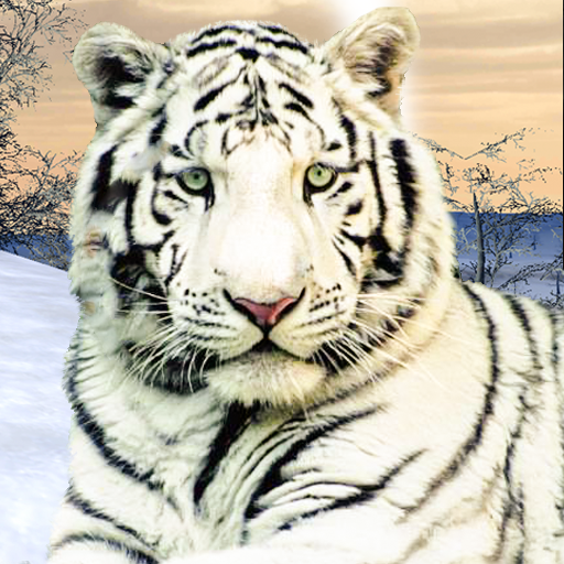 Wild White Tiger: Jungle Hunt 2021 1.6 APK